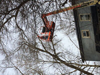 HUGE TREE REMOVAL WITH 60 feet high boomtruck