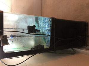 Fish tank 100gal jebo clean and full