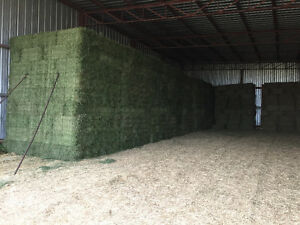 First Cut Hay