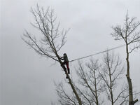 Tree Removal and Pruning Certified Arborist