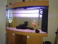Juwel 190 fish tank