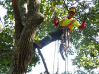 Woodman Tree Work & Vertical Enterprises Free Estimates .