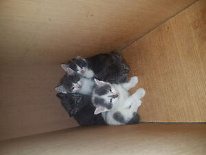 Kittens and mother cat looking for loving home