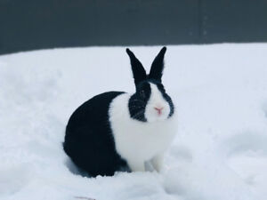 Black and white rabbit with accessories
