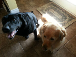 Dog Boarding ~ In-Home Overnight and Day Care Kingston Kingston Area image 5