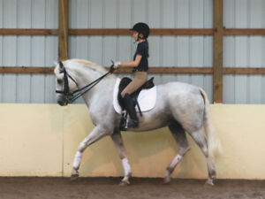 Experienced Rider/Trainer Looking for Horse to Ride