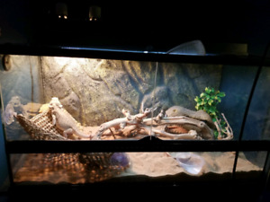 Looking to rehome my bearded dragon and setup