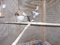 FINCHES FOR SALE why pay retail prices  $30.