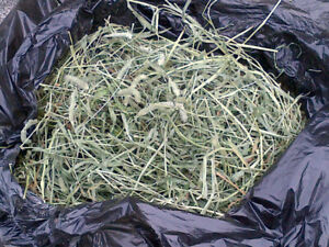 **** TIMOTHY HAY $1 CHEAP Fresh Cut Timothy Hay FREE DELIVERY