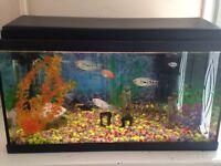60 litre tropical fish tank + fish