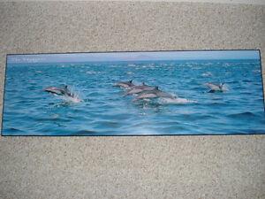 Dolphin Poster Kitchener / Waterloo Kitchener Area image 1