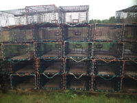 150 wired lobster traps