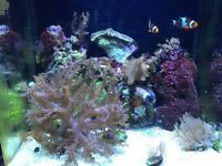 8 gallon nano reef aquarium