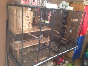 Pair of lovebirds with very large cage