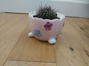 CACTUS in cute ceramic pot, v. healthy