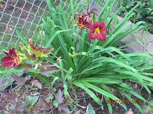 Clematis, annuals & other perennials