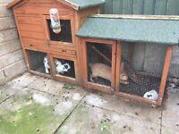 2 rabbits + rabbit hutch for sale