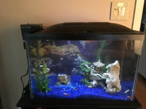 20 gallon aquarium with stand and supplies