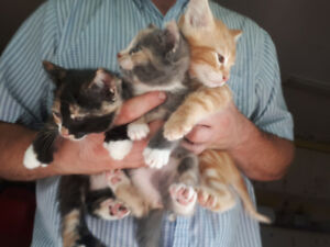 Big Family of Lovely, Happy, Healthy Kittens