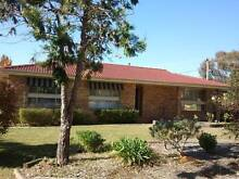 Spacious 3 bed family home in Higgins $399 For Rent, Was $420, Canberra Region Preview