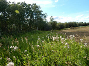 Perfect Hunting Property- Peace River Region/Saddle Hills County