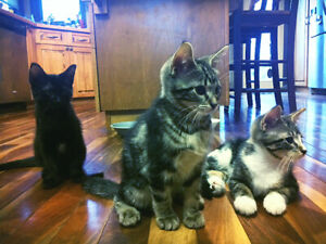Kittens for rehoming Meadow Lake Sk