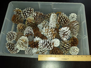 Large Bunch of Pine Cones, Various Sizes
