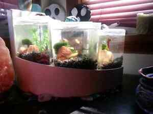 Fish tank... open to offers