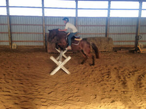 Nice 12 hands red roan pony