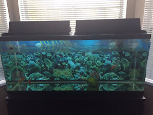 big fish tank for sell and all other accessory