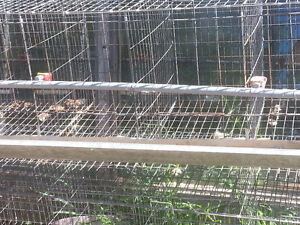 Chicken cages with feed tray/watering system for each cage.