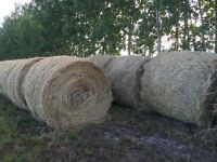 Good Quality Timothy/Orchard Grass/Alfalfa Hay For Sale