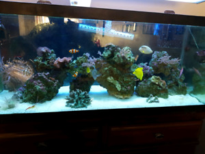 75 gallon saltwater tank full set up