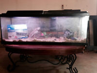 Aquarium 60 or 65 Gallon for Sale!!