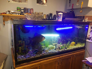 Aquarium 100 gallon
