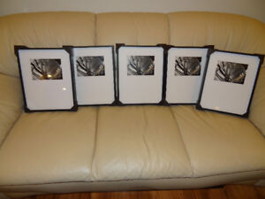 Five Picture Frames never opened brand new 10in by 14in