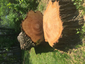 Willow tree trunk to make custom furniture