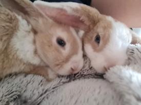 2x mini plush rabbits