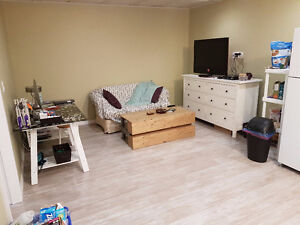 newly built basement with lots of sunshine harbour landing