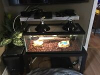 Snake, tank, and accessories for sale