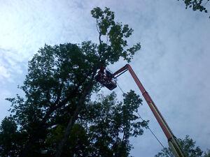 Bayridge Tree Service Kingston Kingston Area image 3