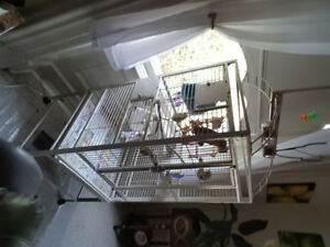 Conure bird and large cage