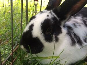 Bunny up for adoption