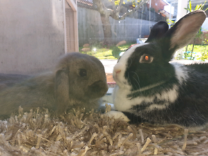 Rabbits full of love with accessories cage and more
