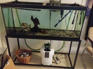 90g aquarium 33g aquarium