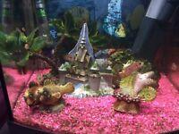 Jewel fry cichlids