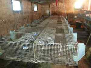 Rabbit wire cages, nestboxes,feeders Kingston Kingston Area image 4