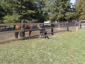 Dog Boarding available on country property