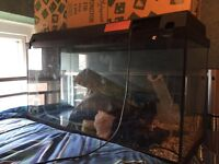 Large fish tank with light & boxed new pump