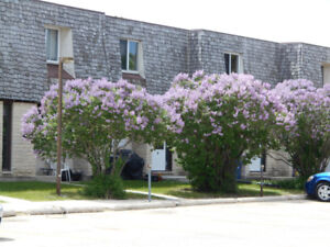 3 Bedroom Town Homes Southdale - Weatherstone Place